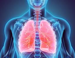 Жир в лёгких