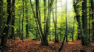 Почему за лесом не видно деревьев