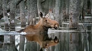 В Петербурге представят лучшие фото конкурса «Дикая природа России»