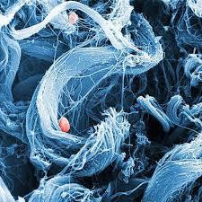 Пересадку органов улучшают злокачественной хитростью