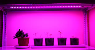 Стеклокерамика в лампах для теплиц поможет ускорить рост растений