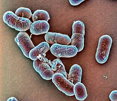 Бактерии изо рта усиливают кишечный рак