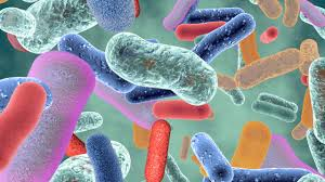 Антибактериальные средства помогают против атеросклероза