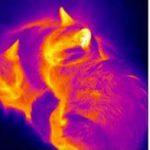 Чувствительные элементы для неохлаждаемых болометров станут более предсказуемыми