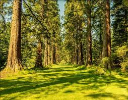 Пригородные леса не успевают поглощать городские выбросы