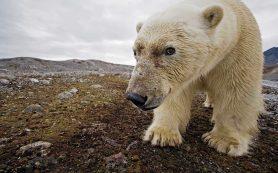 В Норвегии ищут нового владельца для бара, куда заходят белые медведи