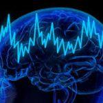 Как мозг отличает одно от другого
