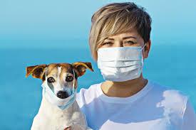 Сколько животных может заразить новый коронавирус