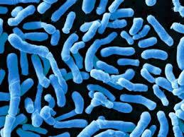 Мозг защищается от микробов кишечным иммунитетом