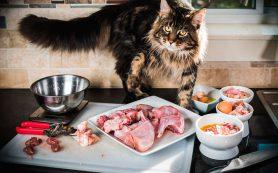 Кошка и плохое питание. Как обезопасить?