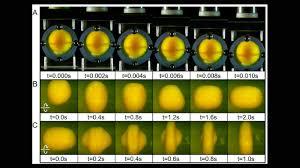На примере куриного яйца выяснилось, какой удар дает наиболее сильное сотрясение мозга