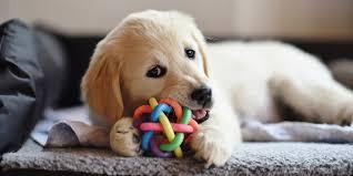 Собаки учат слова, как дети