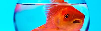 Средство от стресса хотят искать с помощью рыб