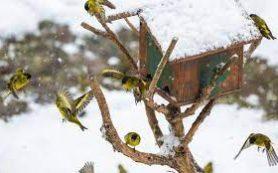 Как правильно помогать учёным и где важнее всего считать птиц