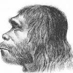 Человеческий мозг увеличился ради охоты