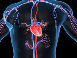 Искусственный сердечный клапан растёт после пересадки