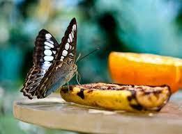 Бабочки не любят тепло