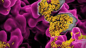 Как хорошие кишечные бактерии мешают плохим