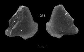 Раскрыто происхождение оружия, 9000 лет пролежавшего в озере Гурон
