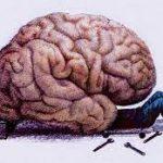 Спермидин стимулирует работу мозга