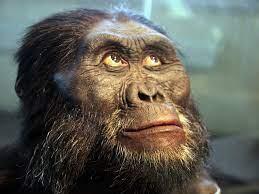 Люди вышли из Африки с обезьяньим мозгом