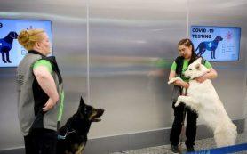 Собаки чуют COVID-19