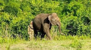 В Сочи открыли первый в стране парк для отдыха слонов