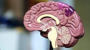 Ученые обнаружили «печать бедности» в мозге детей из семей с низким уровнем жизни