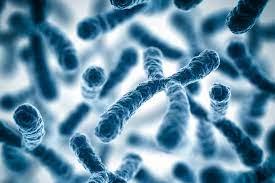 Клетки упаковывают хромосомы разными способами