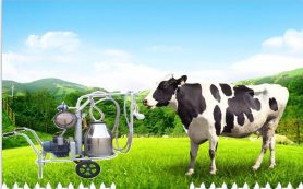 В чем особенности и отличия доильных аппаратов для коз от мехдоек для коров?