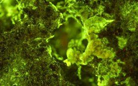 Астронавты использовали бактерии для извлечения полезных металлов из горных пород
